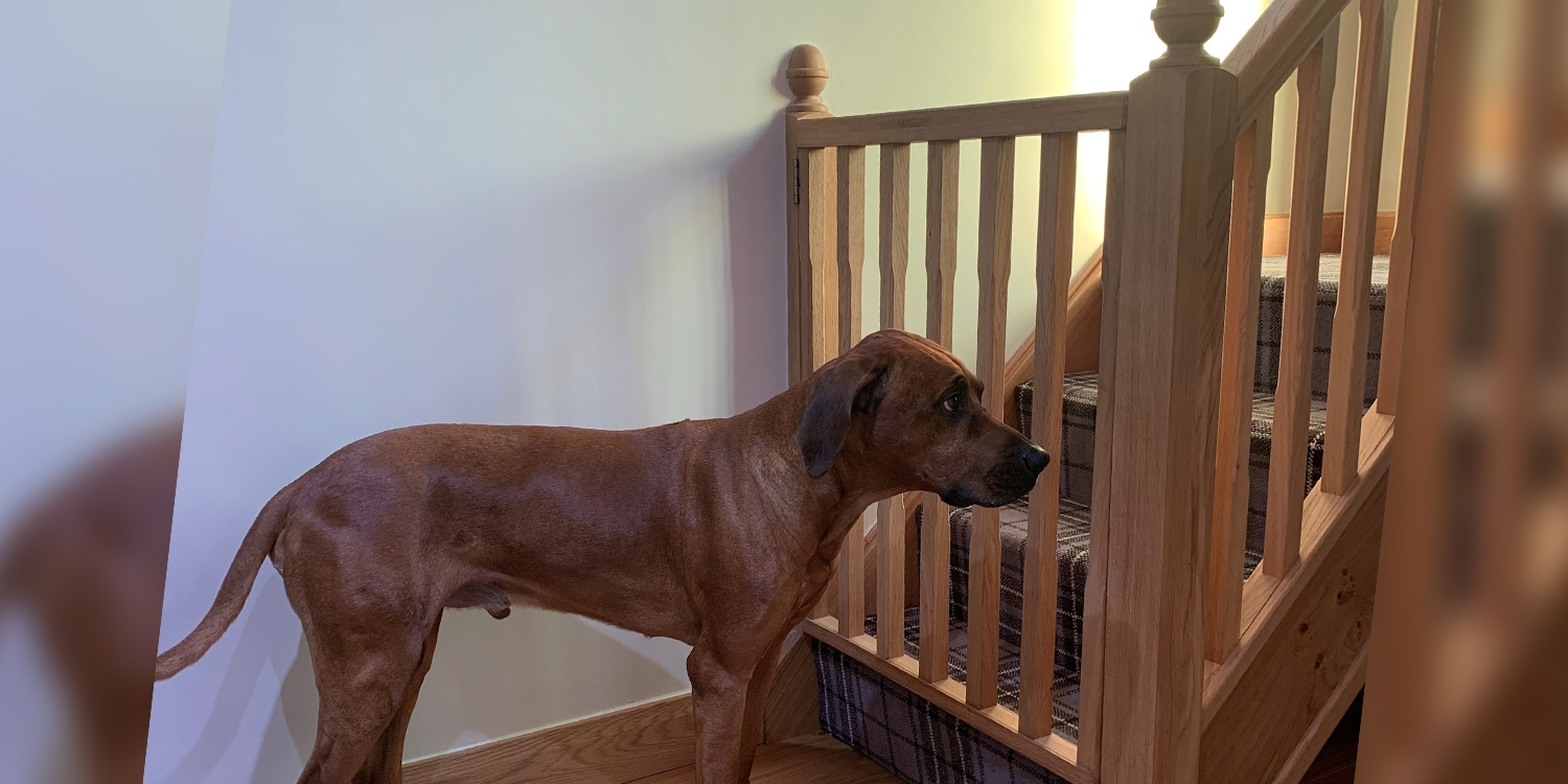 dog and stair gate, bespoke stairgate